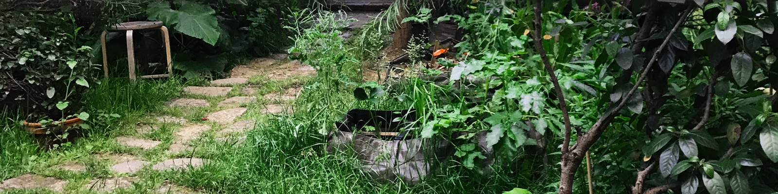 Remettre En état Un Jardin Abandonné Ou Délaissé